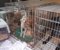 Kauza Týnec (u Břeclavi) týrání psů