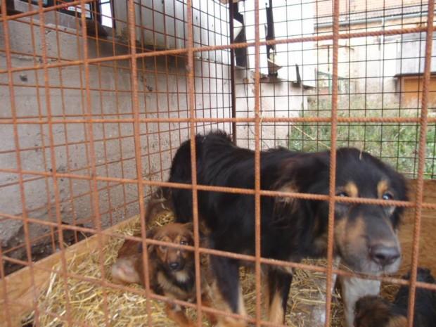 Kauza 28 týraných psů – Kunštát