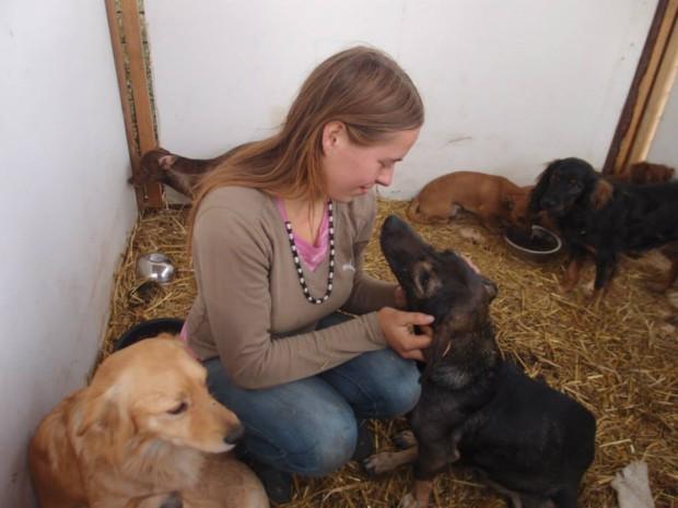 Kauza týrání 17 psů v bydlišti Romů