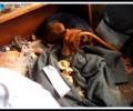 Kauza Vyškov 11 psů
