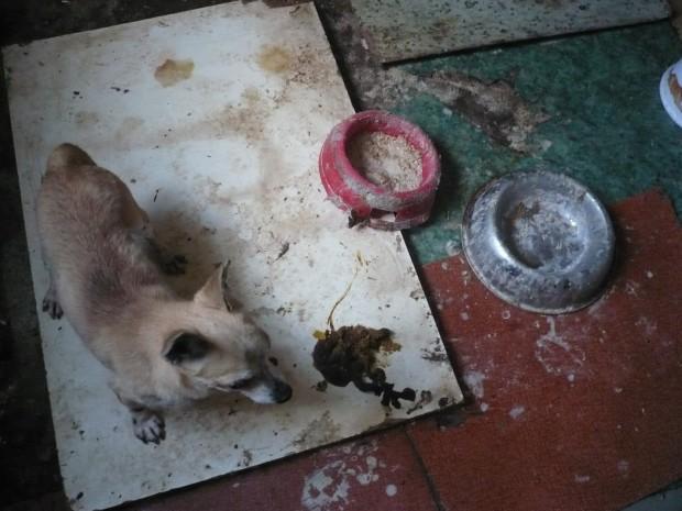 Množírna – krutě týraní psi a kočky – duben 2011