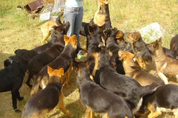 Kauza Nemotice 80 psů – září 2011