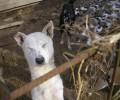 Kauza Mostky u Kaplice – 90 psů