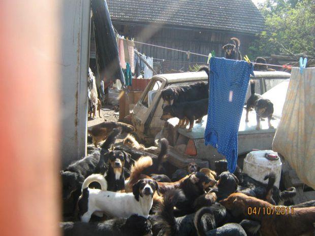 Kauza Třtěnice – další desítky psů!