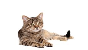 Kočky v Toulavých Tlapkách