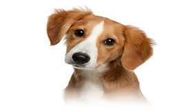Psi v Toulavých Tlapkách
