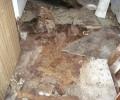 Třicet ubohých psů z Jičína – listopad 2010