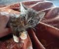 Péče o kočku pro začátečníky