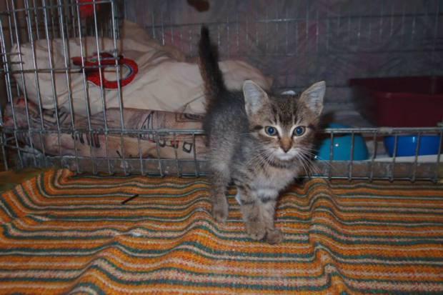 Nové hubené koťátko v karanténě, pomůžete?