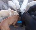 Rozhovor o převýchově psů – postupy mojí práce