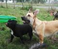 Převýchova psů, kteří vyrůstali bez kontaktu s člověkem