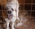 Agresivní pes Rony