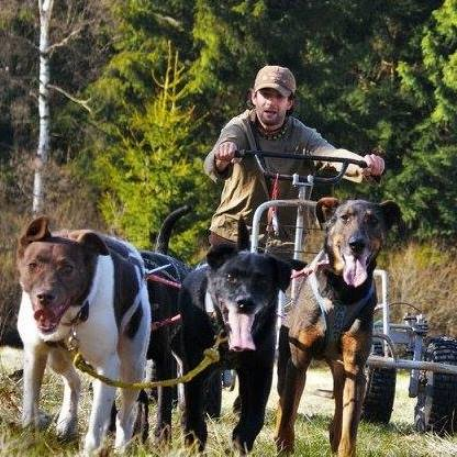Mushing – psí sporty